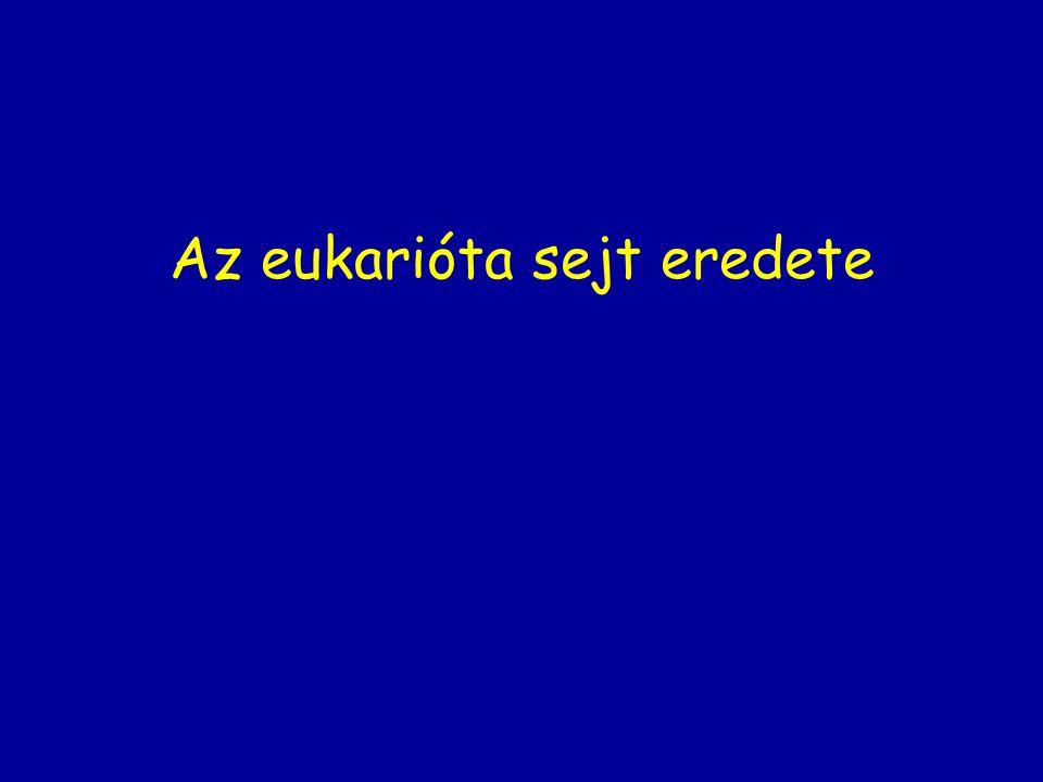 Az eukarióta sejt eredete