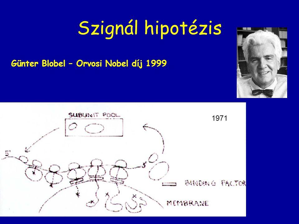 Szignál hipotézis Günter Blobel – Orvosi Nobel díj 1999 1971