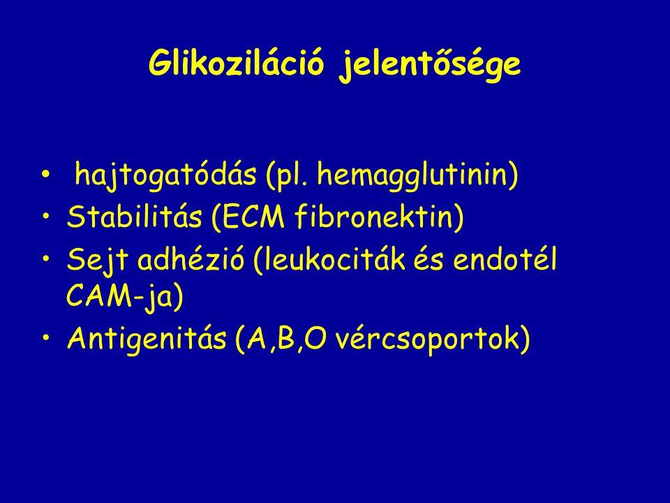 Glikoziláció jelentősége