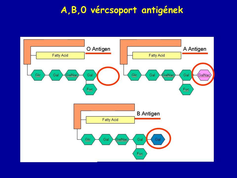 A,B,0 vércsoport antigének