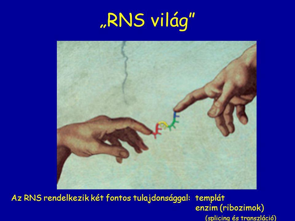 """""""RNS világ Az RNS rendelkezik két fontos tulajdonsággal: templát"""