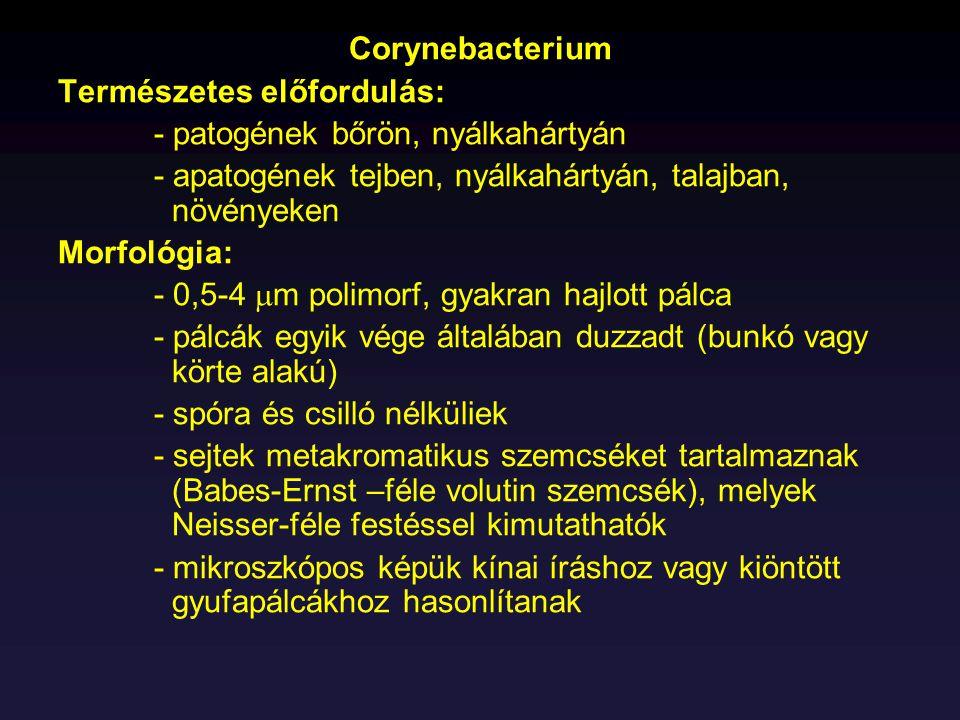 Corynebacterium Természetes előfordulás: - patogének bőrön, nyálkahártyán. - apatogének tejben, nyálkahártyán, talajban, növényeken.