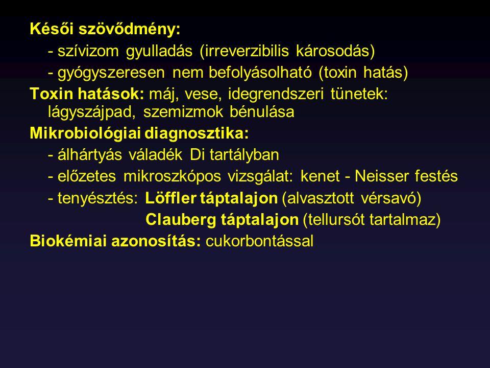 Késői szövődmény: - szívizom gyulladás (irreverzibilis károsodás) - gyógyszeresen nem befolyásolható (toxin hatás)