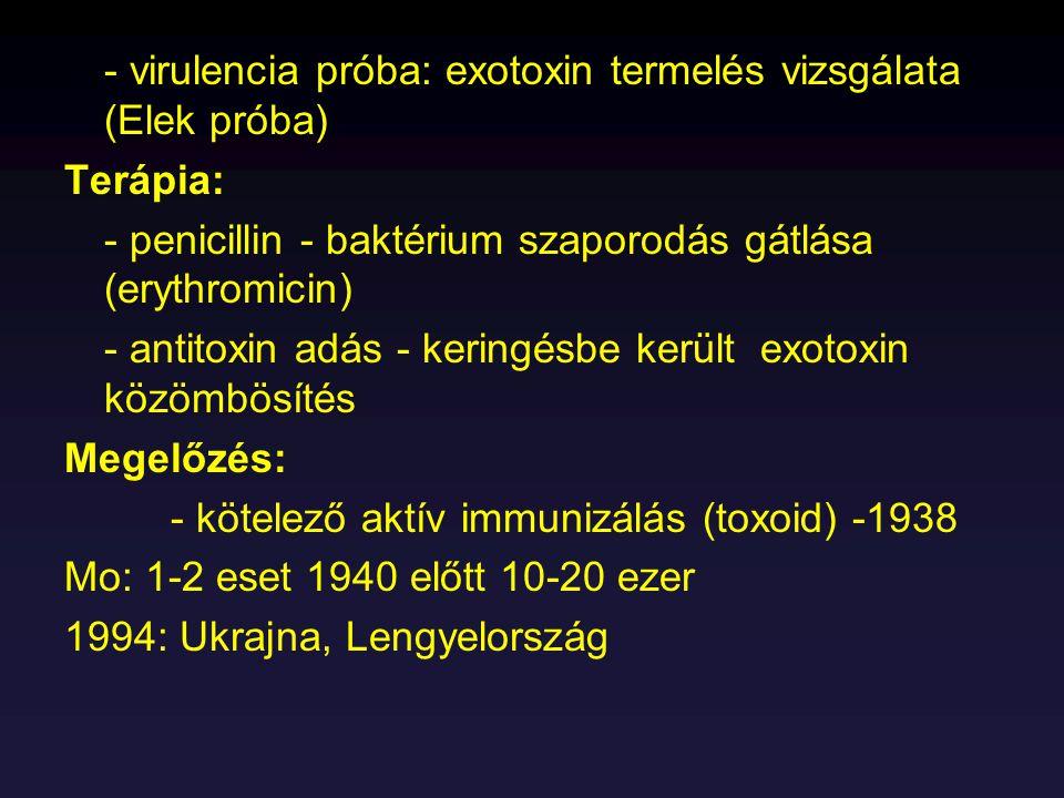 - virulencia próba: exotoxin termelés vizsgálata (Elek próba)