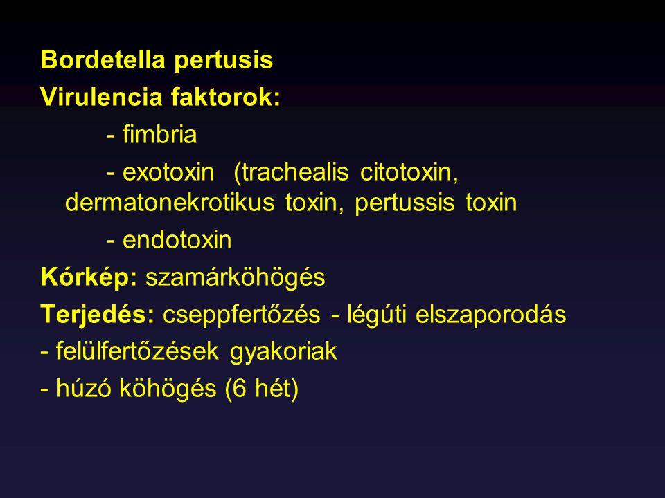 Bordetella pertusis Virulencia faktorok: - fimbria. - exotoxin (trachealis citotoxin, dermatonekrotikus toxin, pertussis toxin.