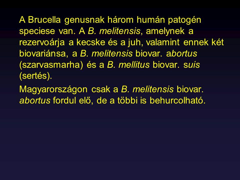 A Brucella genusnak három humán patogén speciese van. A B