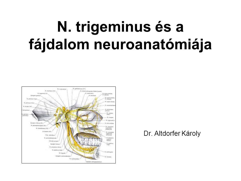 N. trigeminus és a fájdalom neuroanatómiája