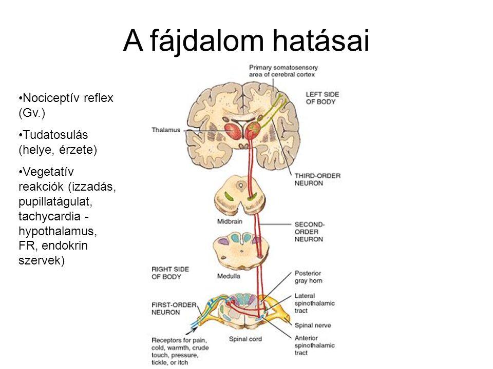 A fájdalom hatásai Nociceptív reflex (Gv.) Tudatosulás (helye, érzete)