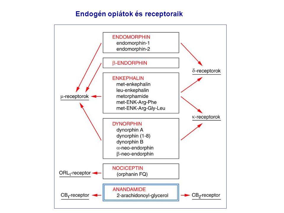 Endogén opiátok és receptoraik