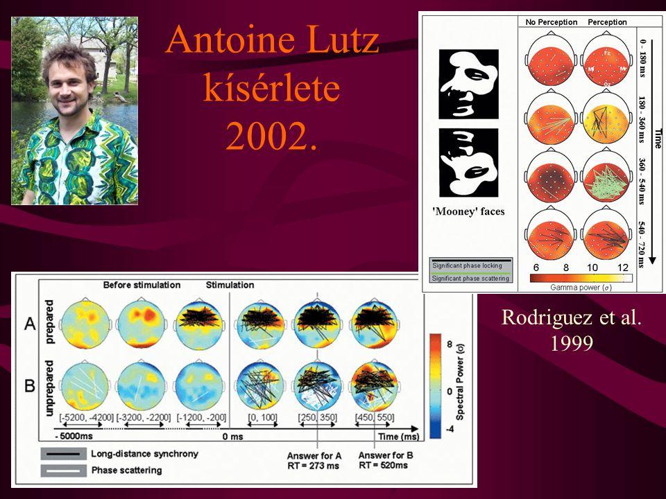 Antoine Lutz kísérlete 2002.