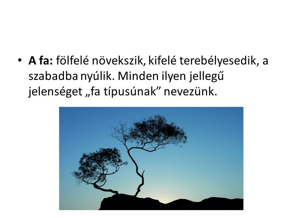 A fa: fölfelé növekszik, kifelé terebélyesedik, a szabadba nyúlik