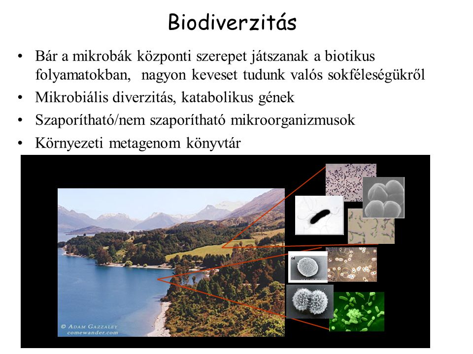 Biodiverzitás Bár a mikrobák központi szerepet játszanak a biotikus folyamatokban, nagyon keveset tudunk valós sokféleségükről.