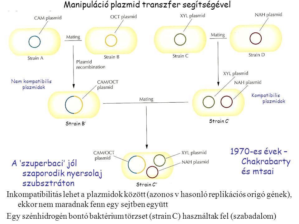 Manipuláció plazmid transzfer segítségével