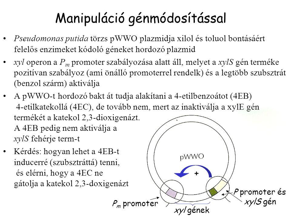 Manipuláció génmódosítással