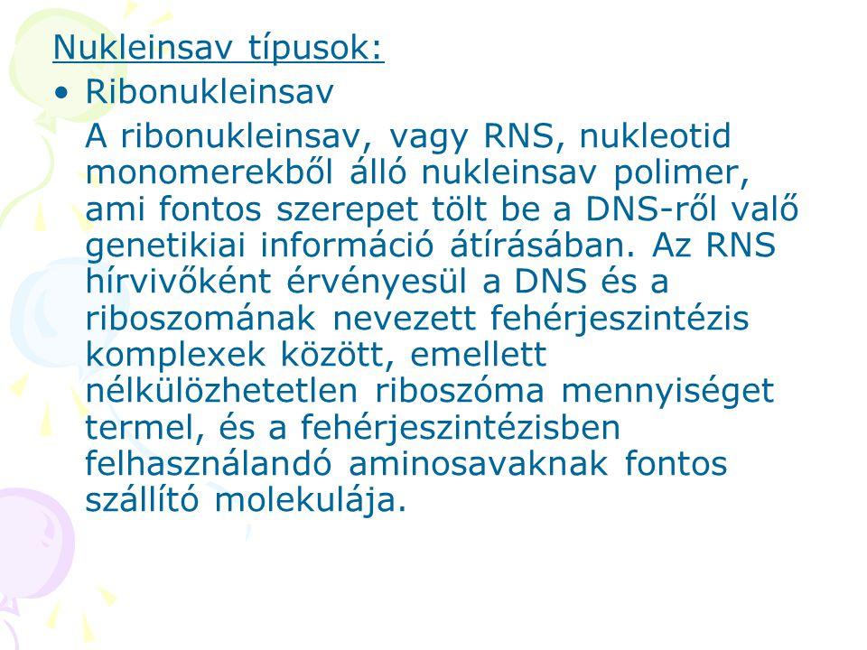 Nukleinsav típusok: Ribonukleinsav.