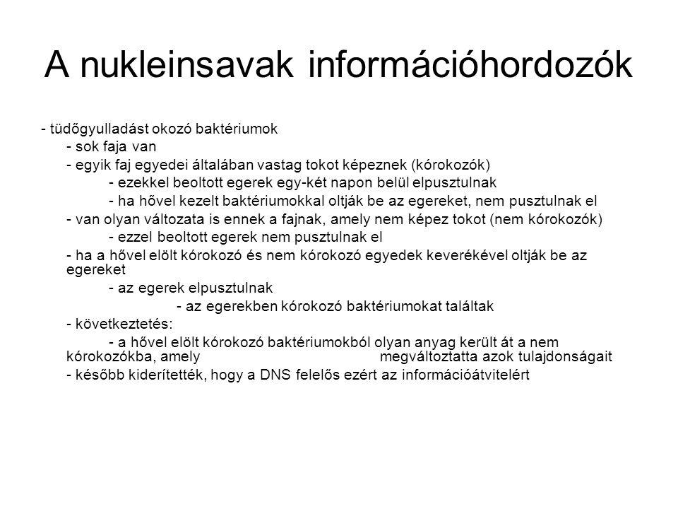 A nukleinsavak információhordozók