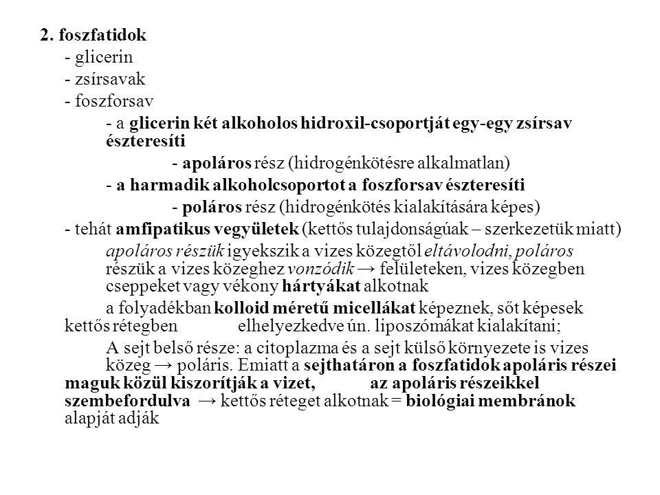 2. foszfatidok - glicerin. - zsírsavak. - foszforsav. - a glicerin két alkoholos hidroxil-csoportját egy-egy zsírsav észteresíti.