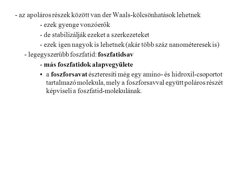 - az apoláros részek között van der Waals-kölcsönhatások lehetnek