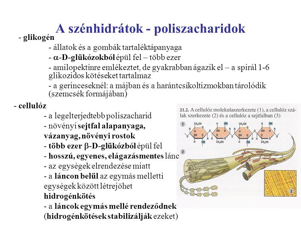 A szénhidrátok - poliszacharidok