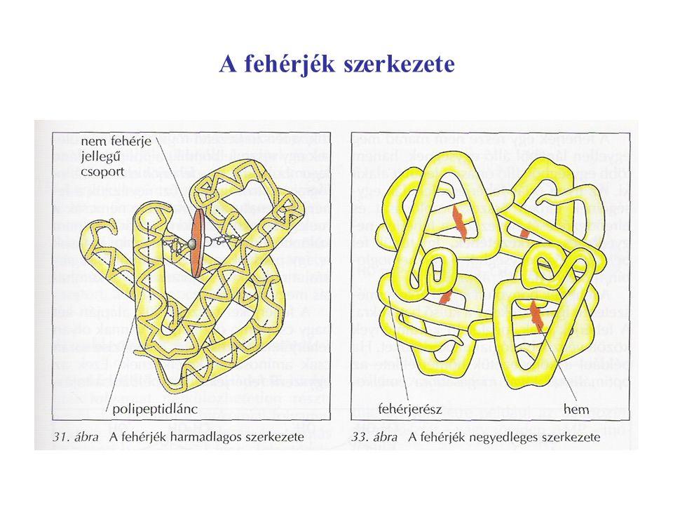 A fehérjék szerkezete