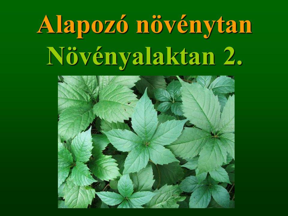 Alapozó növénytan Növényalaktan 2.