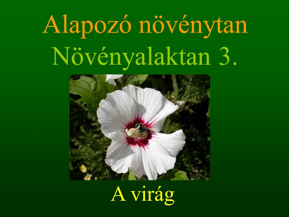 Alapozó növénytan Növényalaktan 3.