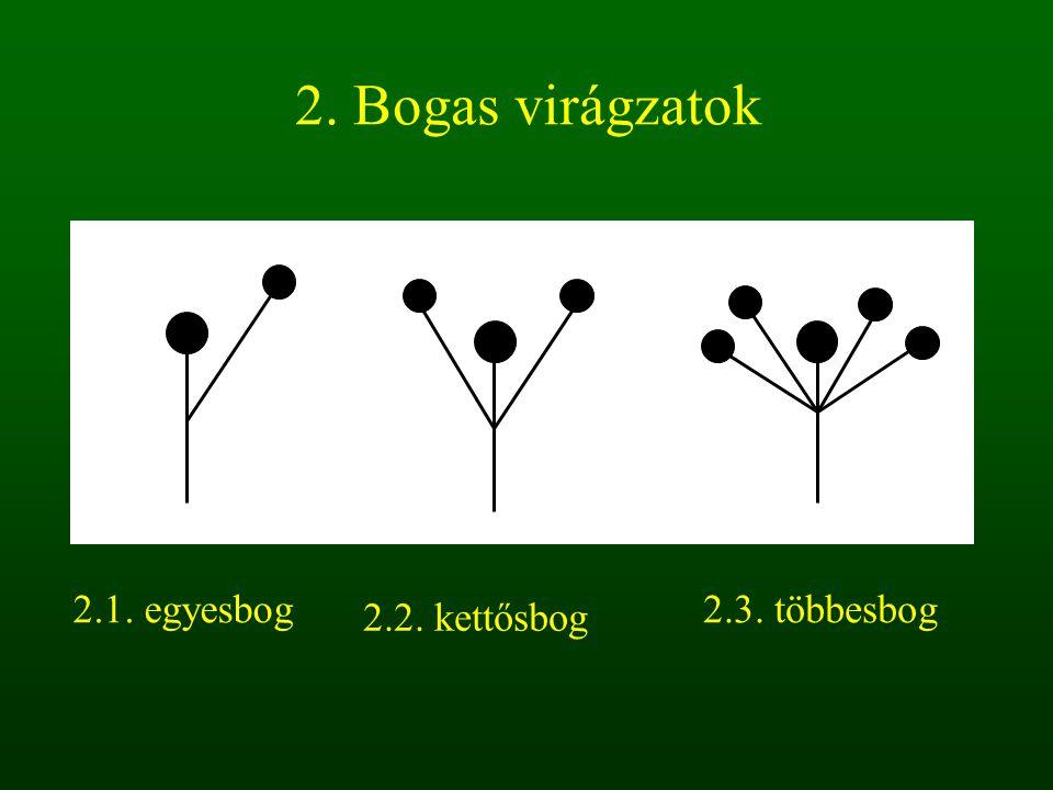 2. Bogas virágzatok 2.1. egyesbog 2.3. többesbog 2.2. kettősbog