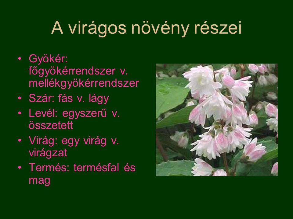 A virágos növény részei