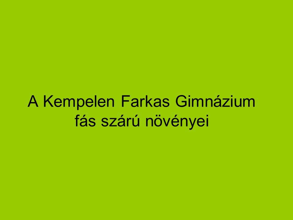 A Kempelen Farkas Gimnázium fás szárú növényei