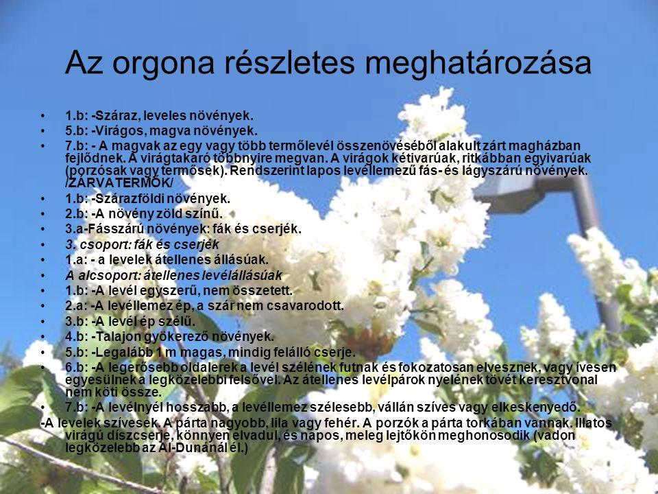 Az orgona részletes meghatározása