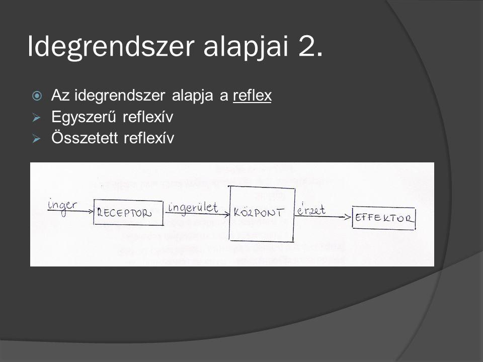 Idegrendszer alapjai 2. Az idegrendszer alapja a reflex