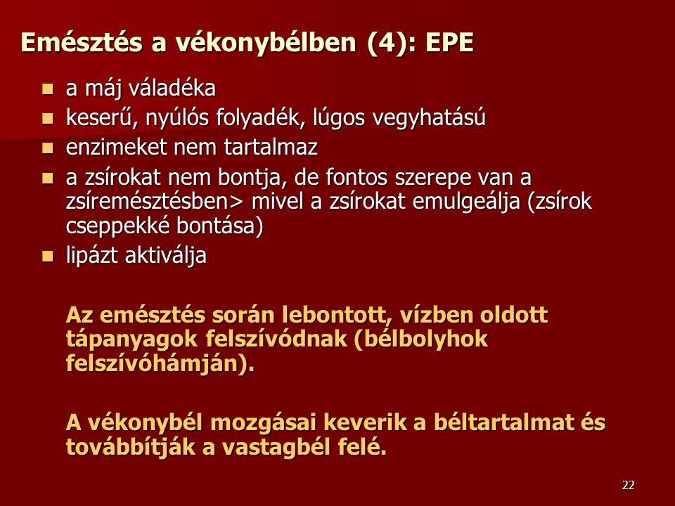 Emésztés a vékonybélben (4): EPE