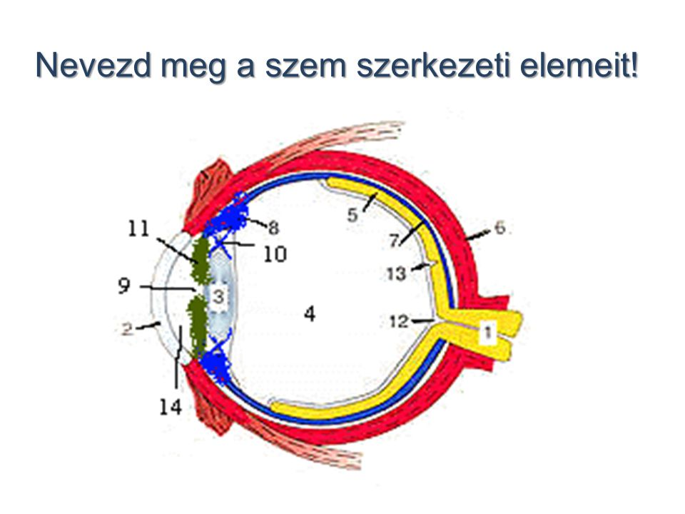 Nevezd meg a szem szerkezeti elemeit!