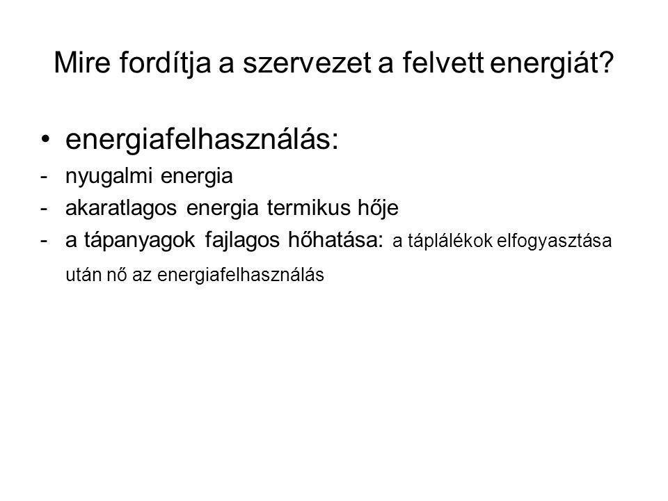 Mire fordítja a szervezet a felvett energiát
