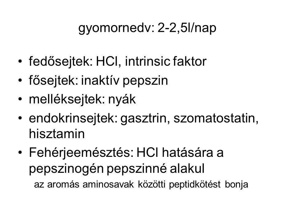 fedősejtek: HCl, intrinsic faktor fősejtek: inaktív pepszin