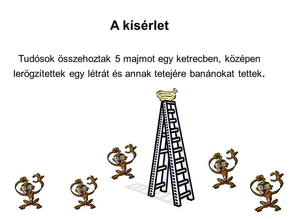 A kísérlet Tudósok összehoztak 5 majmot egy ketrecben, középen lerögzítettek egy létrát és annak tetejére banánokat tettek.
