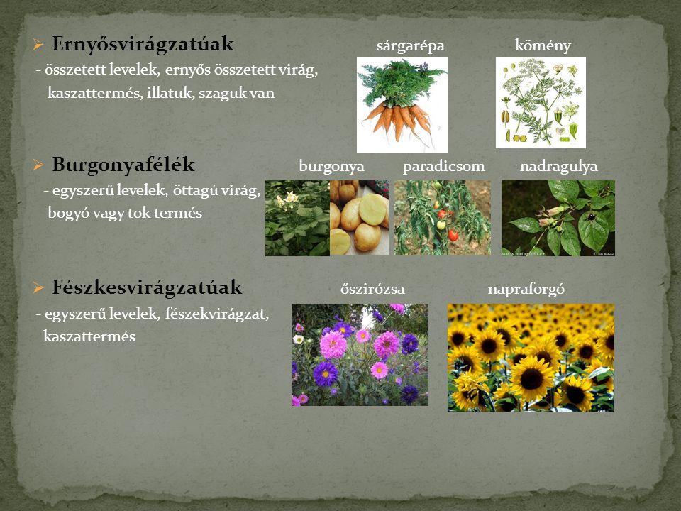 Ernyősvirágzatúak sárgarépa kömény