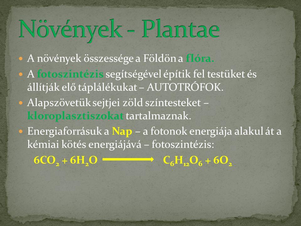 Növények - Plantae A növények összessége a Földön a flóra.