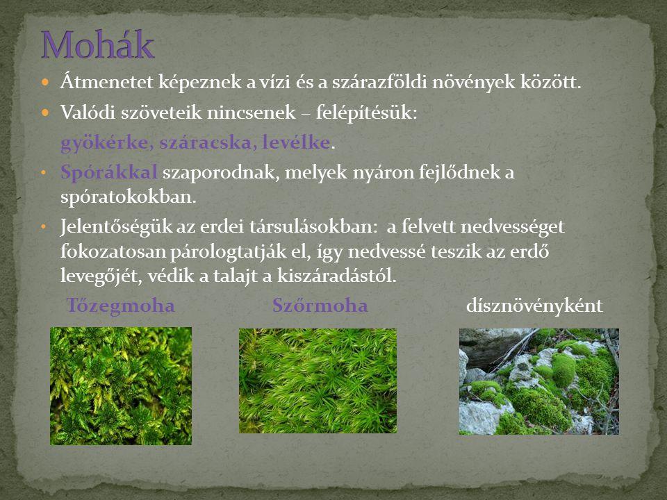 Mohák Átmenetet képeznek a vízi és a szárazföldi növények között.