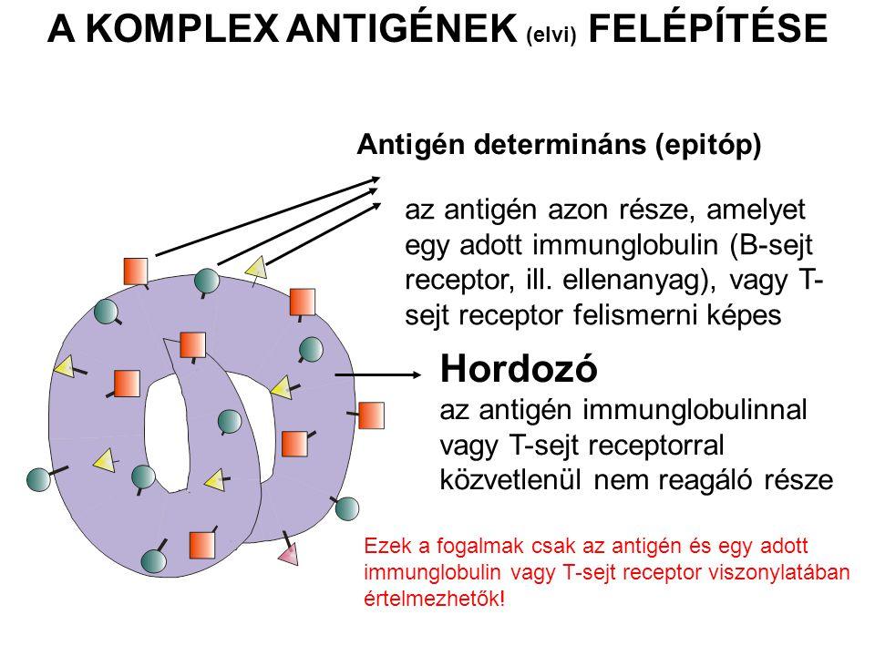 A KOMPLEX ANTIGÉNEK (elvi) FELÉPÍTÉSE