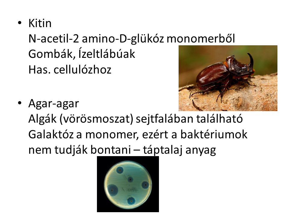 Kitin N-acetil-2 amino-D-glükóz monomerből Gombák, Ízeltlábúak Has
