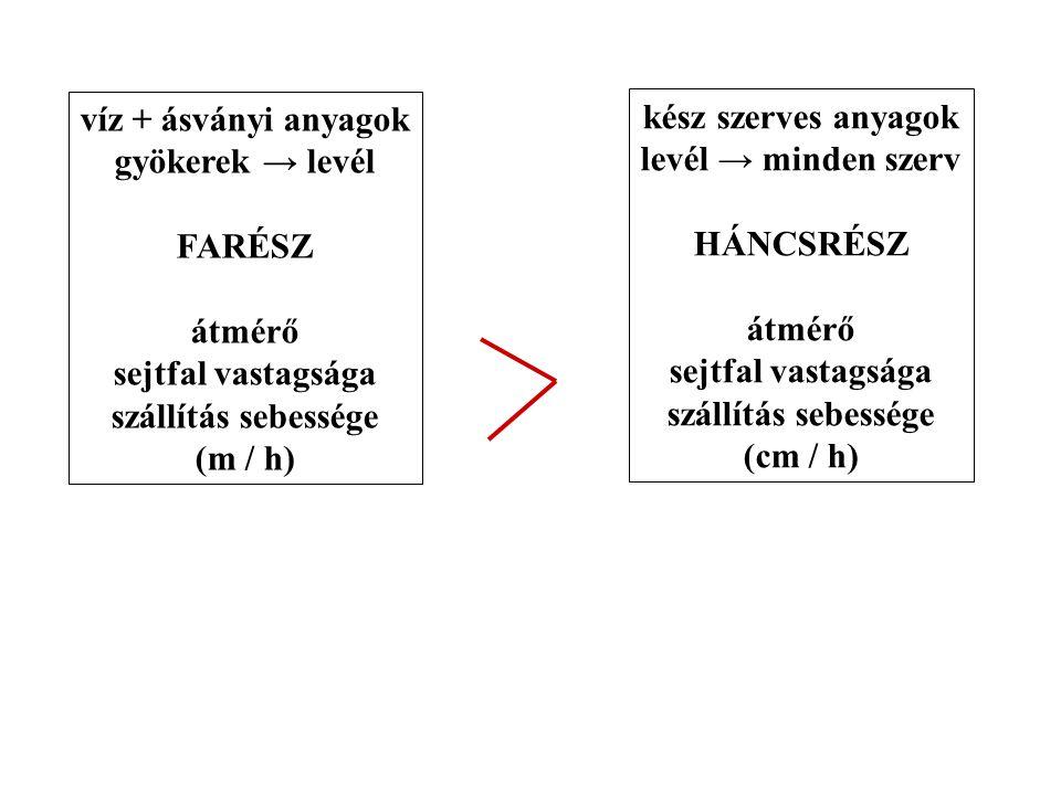víz + ásványi anyagok gyökerek → levél. FARÉSZ. átmérő. sejtfal vastagsága. szállítás sebessége.