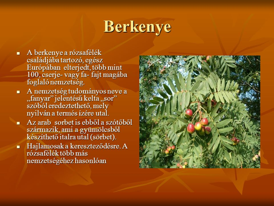 Berkenye A berkenye a rózsafélék családjába tartozó, egész Európában elterjedt, több mint 100, cserje- vagy fa- fajt magába foglaló nemzetség.