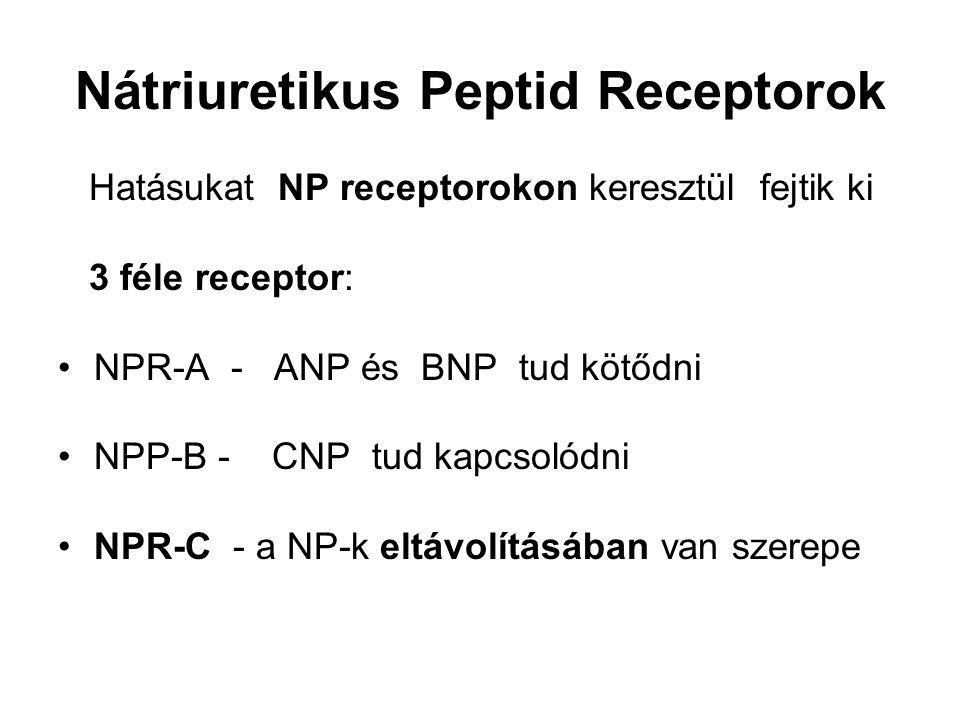 Nátriuretikus Peptid Receptorok