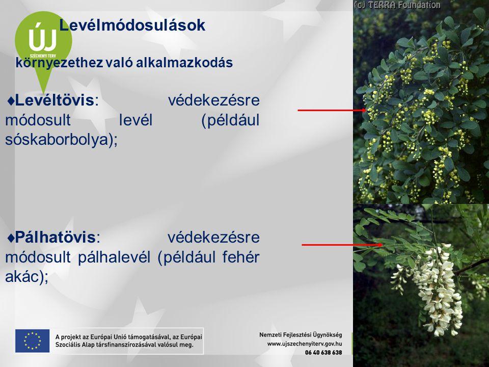 Levéltövis: védekezésre módosult levél (például sóskaborbolya);