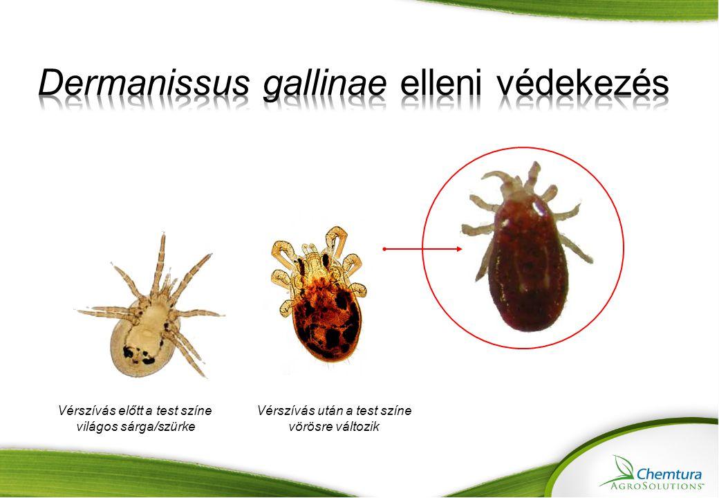 Dermanissus gallinae elleni védekezés