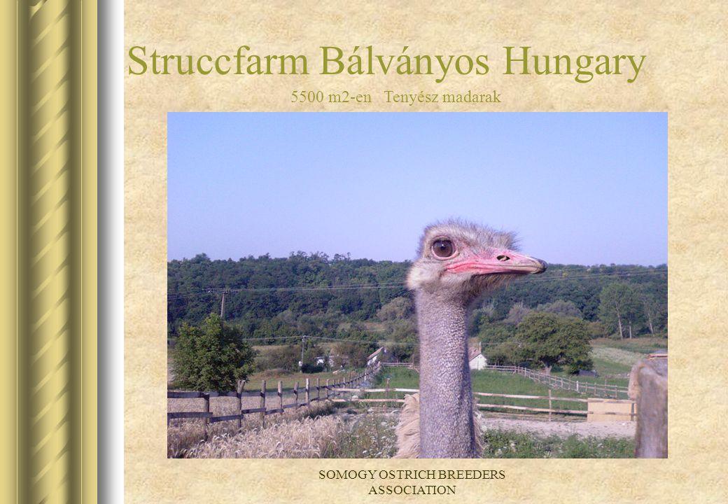 Struccfarm Bálványos Hungary