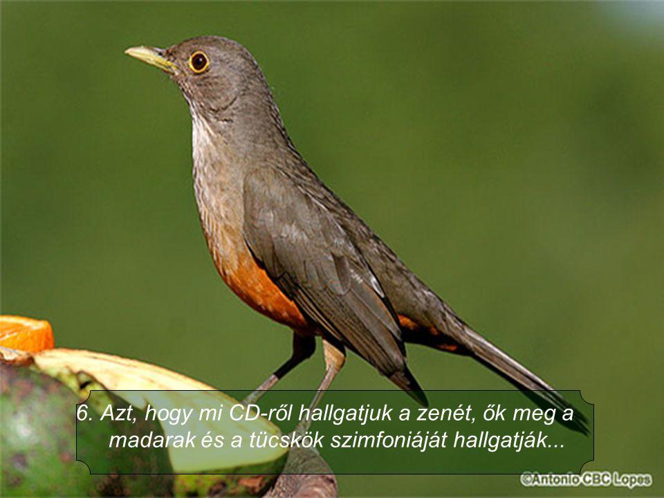 Azt, hogy mi CD-ről hallgatjuk a zenét, ők meg a madarak és a tücskök szimfoniáját hallgatják...