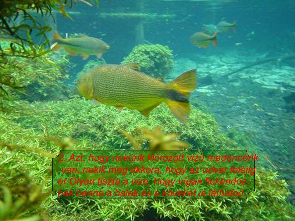 2. Azt, hogy nekünk klórozott vizű medencénk van, nekik meg akkora, hogy az udvar feléjig