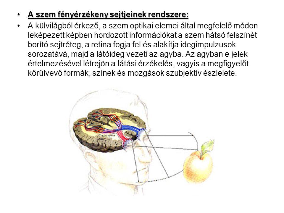 A szem fényérzékeny sejtjeinek rendszere: